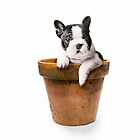 Potted Pooch by Andrew Bret Wallis