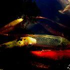 Koi Fish by Christina Tang