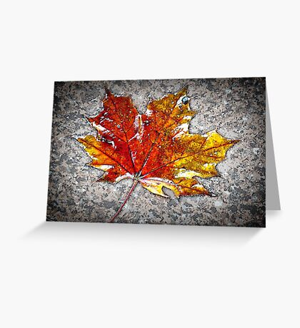 the maple leaf Greeting Card