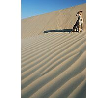 Dune Dog, India Photographic Print