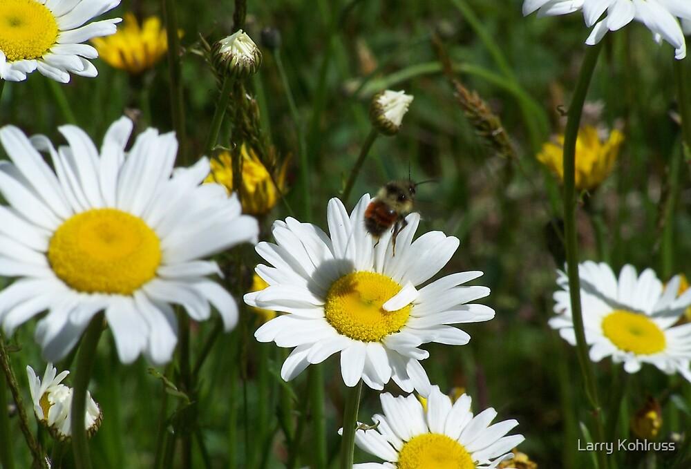 Bee. 2 by Larry Kohlruss