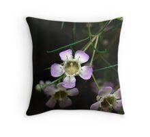 Geraldton Wax Blossom - White Throw Pillow