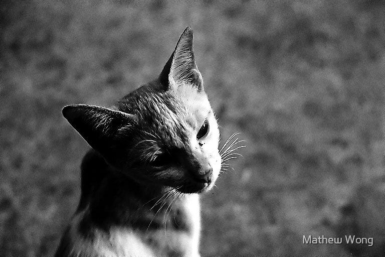 Meow by Mathew Wong