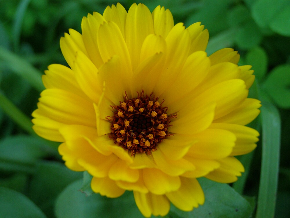 bright yellow flower by davrosphotography