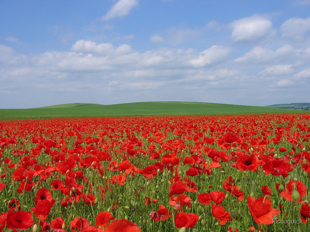 Poppy Fields in Hampshire, England by kissuquick