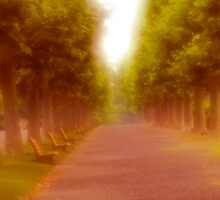 Row of trees and benches by EddieS