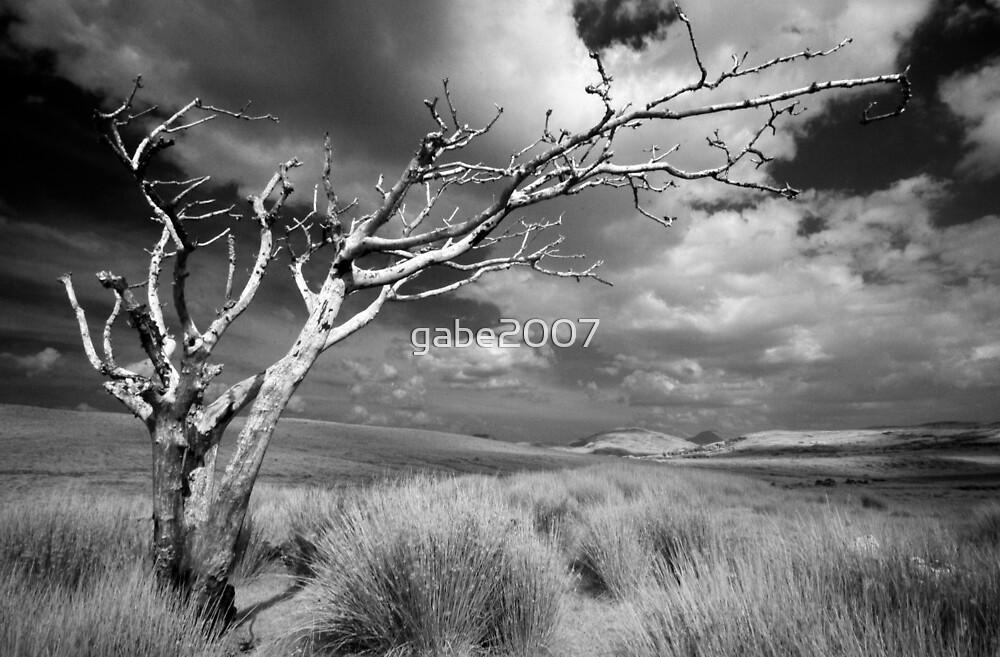 dead tree landscape by gabe2007
