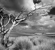 dead tree landscape by gabe2007