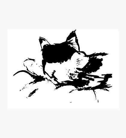 Sleeping Callie Kitty Photographic Print