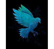 Birdy Bird Photographic Print