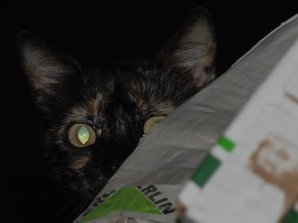 Peek a boo! by Maddie