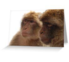 Barbary Apes Greeting Card