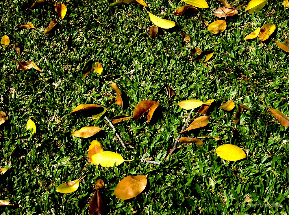 Leaves by Kirsten Harding