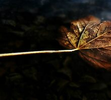 Moon Lit Leaf by audiomad
