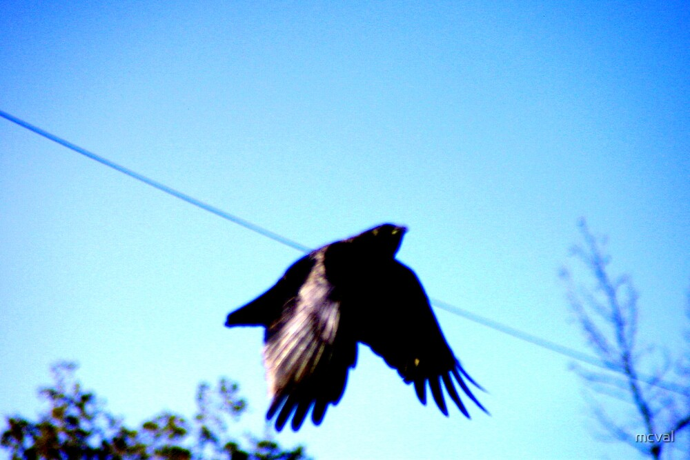 Crow Two by mcval