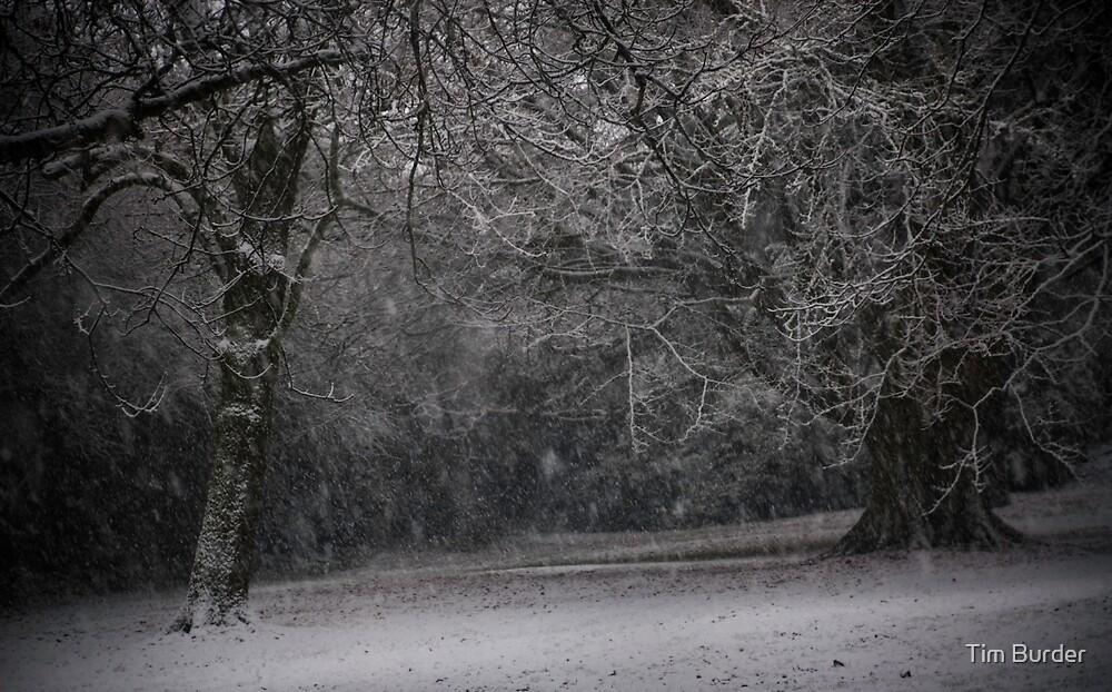 Winter's Day 1 by Tim Burder