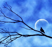 Moonbird by webgrrl