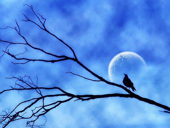 Moonbird by webgrrl