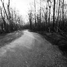 there's a track....Gippsland bushfires 2007, Vic by Tony Middleton