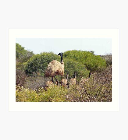 Emus In The Bush Art Print