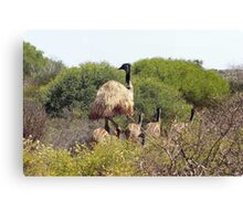 Emus In The Bush Canvas Print