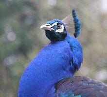 Peacock by davidbenjamin333