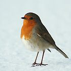 Snow Robin by Terry Cooper