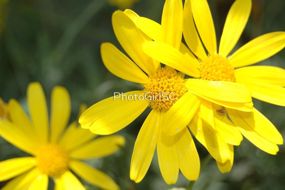 Burst of Yellow by Bjana Hoey
