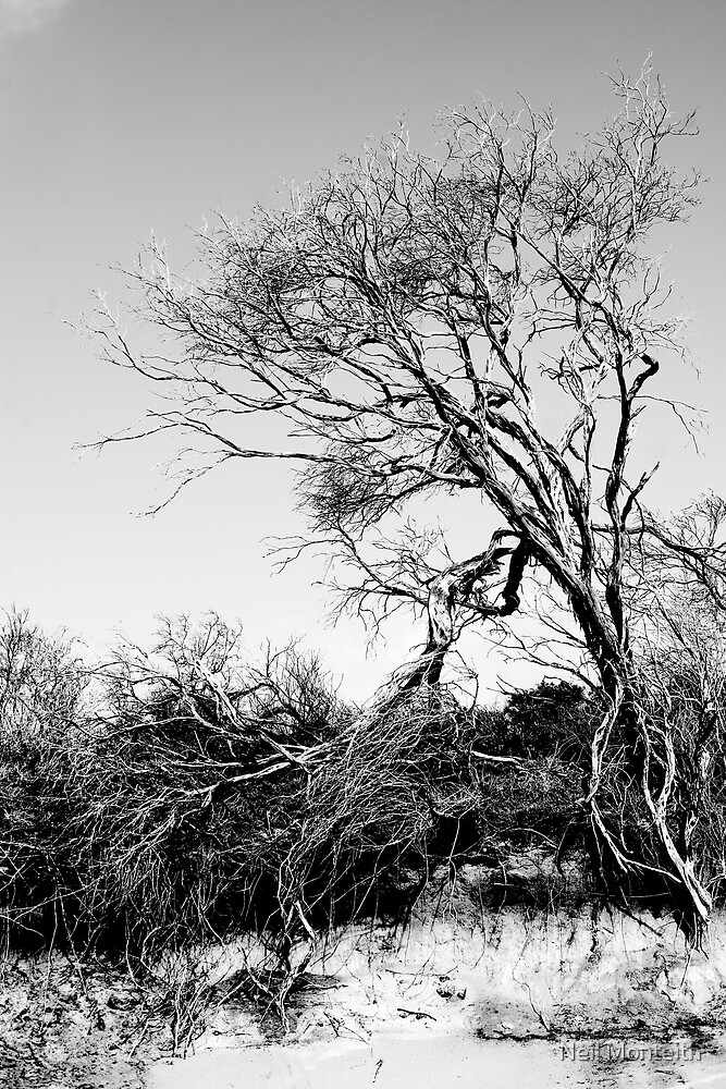 The Dead Tree by Neil Monteith