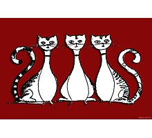3 Cats (on red) Photographic Print