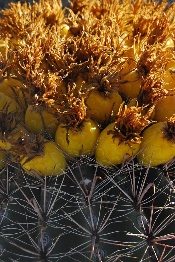Barrel Cactus Fruit by Adrian Figueroa