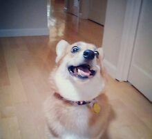 corgi with crazy eyes by fincher