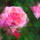 Pink Roses in Anzures 1 Art Triangles 1 by Christopher Johnson