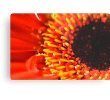 flower in red Metal Print
