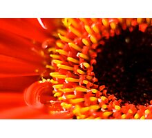flower in red Photographic Print