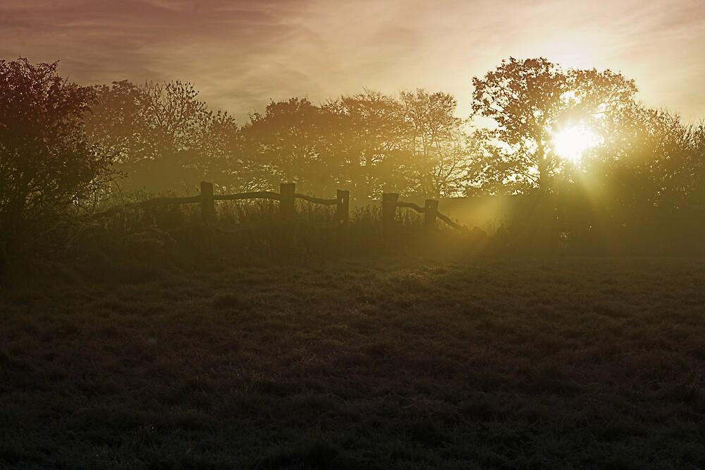 Farm Mist by Moth