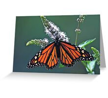 Magnificent Monarch Greeting Card