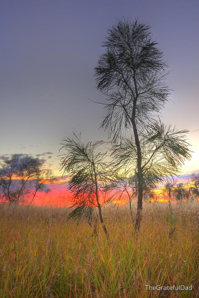 Bush Sunset by TheGratefulDad