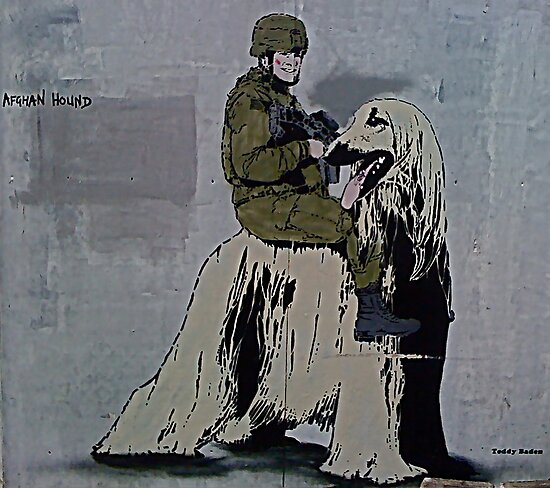 Afghan Hound! by Tim Constable