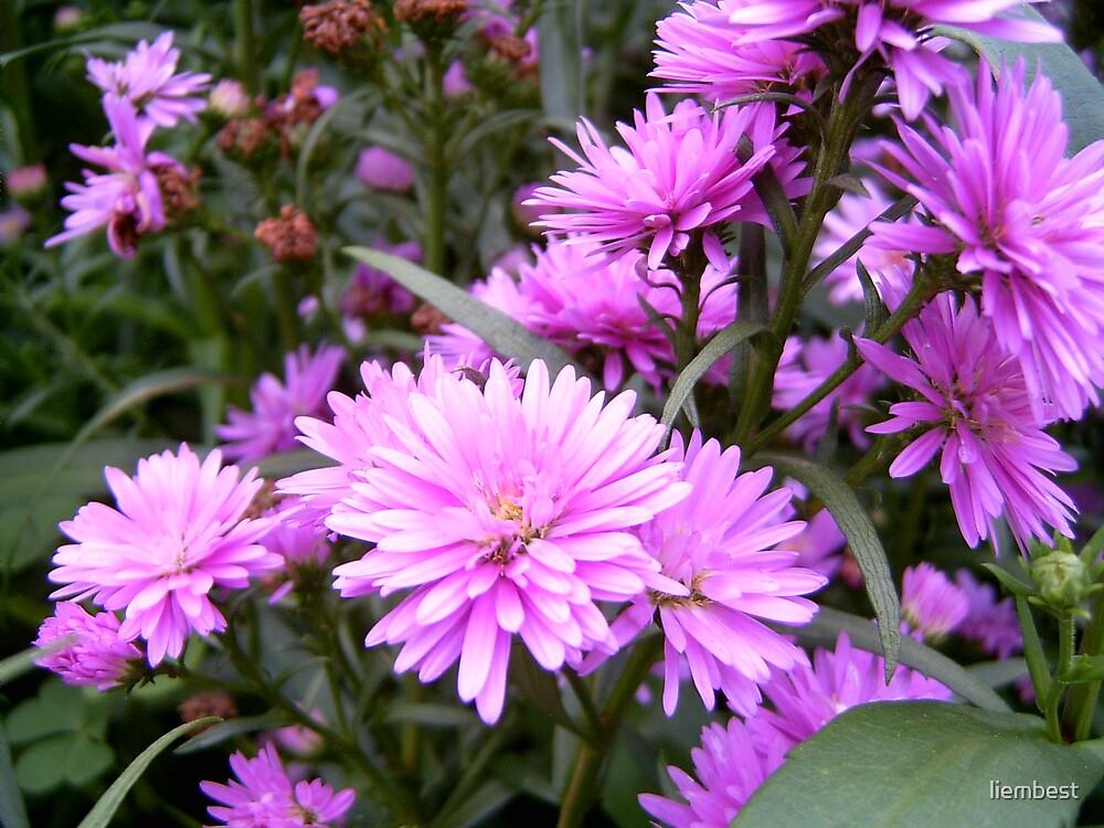 Flower 2 by liembest