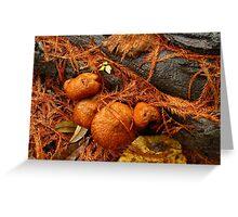 Rain On The  Fungi Greeting Card