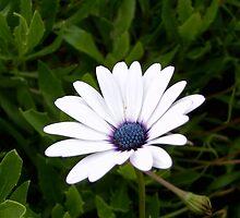 Flower 3 by liembest