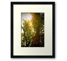 Tree to Infinity Framed Print
