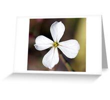 Radish Flower Greeting Card