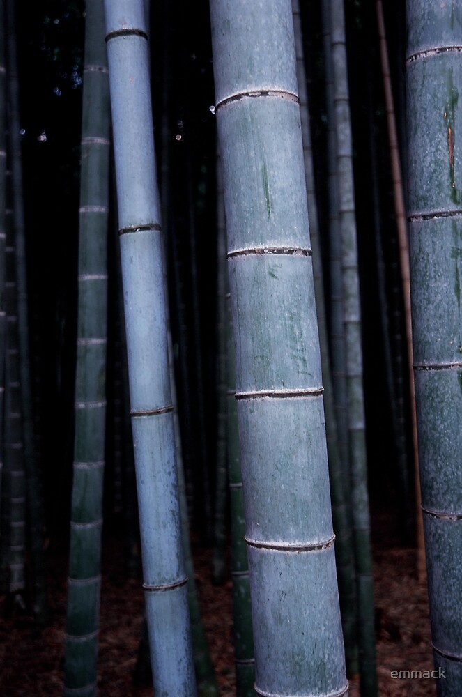 Blue Bamboo, Kyoto by emmack