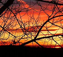 Sunrise by Penny Rinker