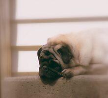My Little Snookems by Jen Marsh