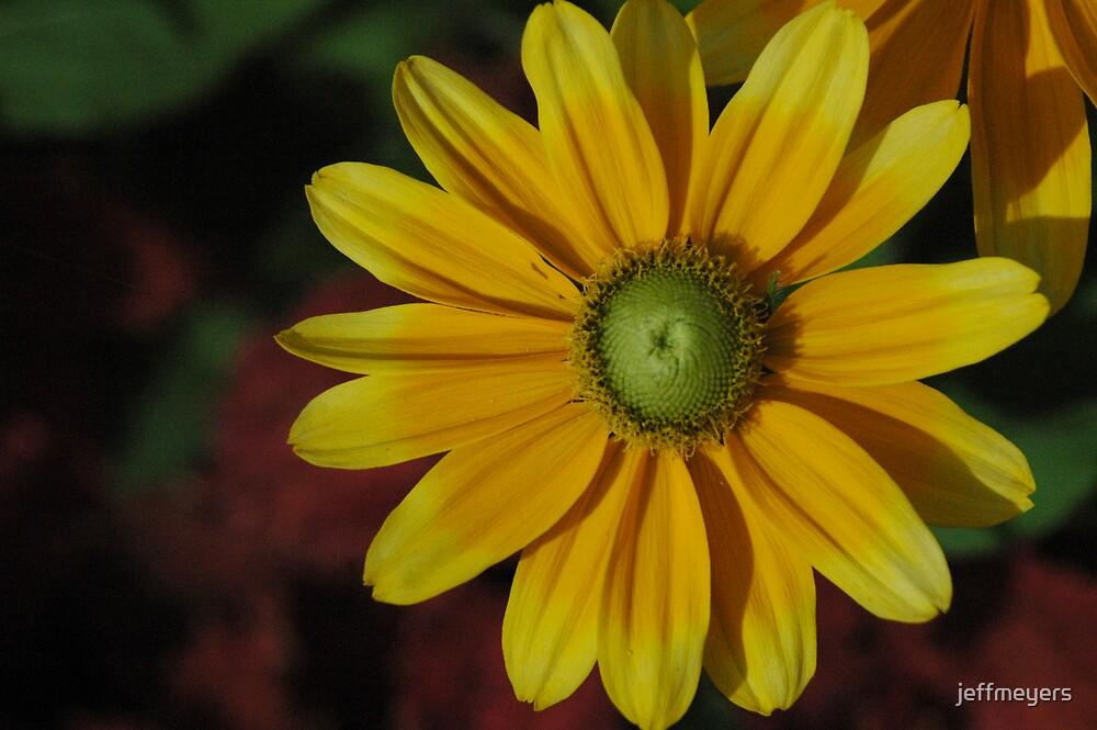 Yellow Daisy by jeffmeyers