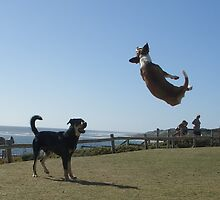 Magic Dog by Chris Putnam