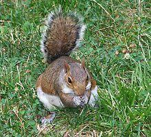 Aaawww Nuts by Jen Marsh